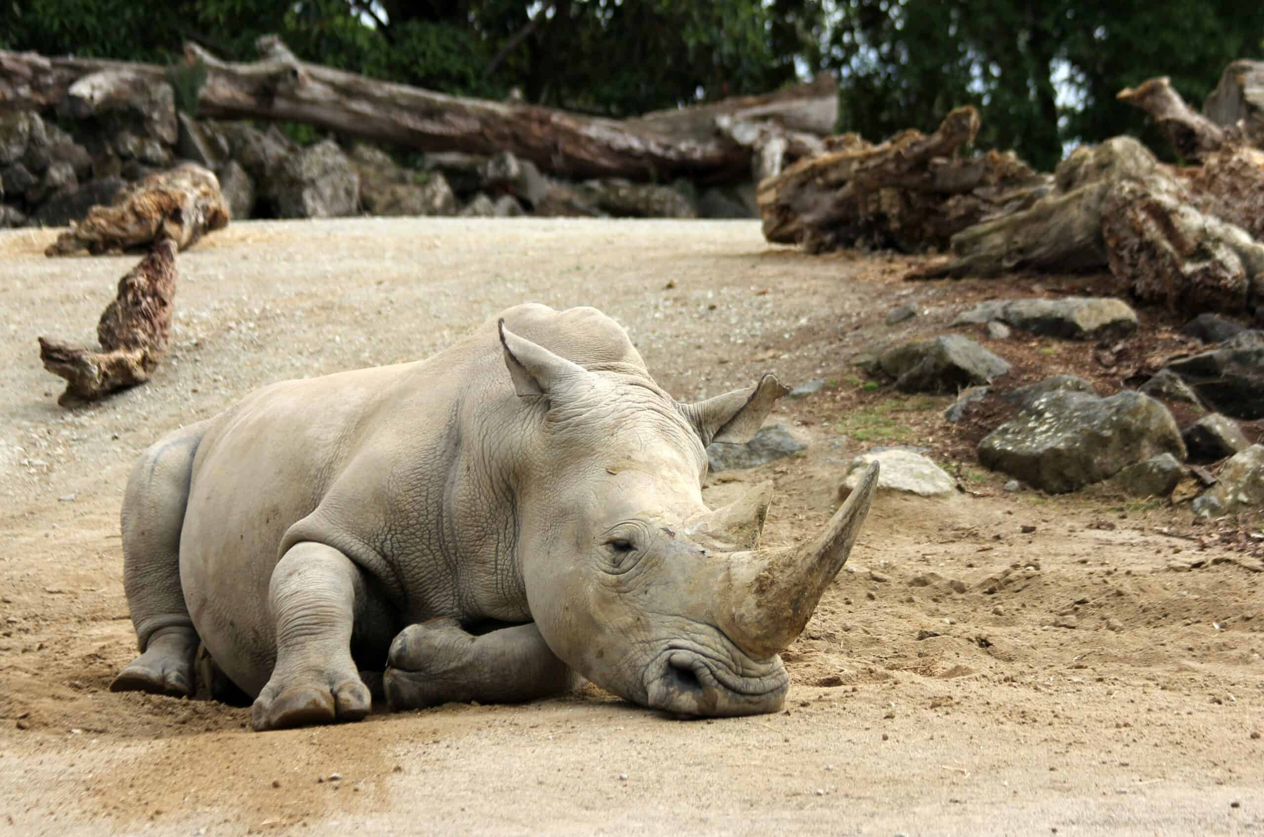 digital marketing for Zoos